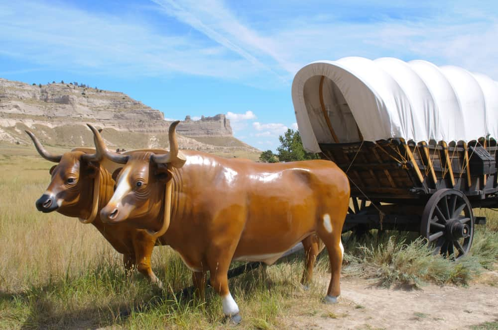 Oxen and wagon along the Oregon Trail